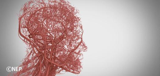 【美肌や老化と毛細血管の関係】